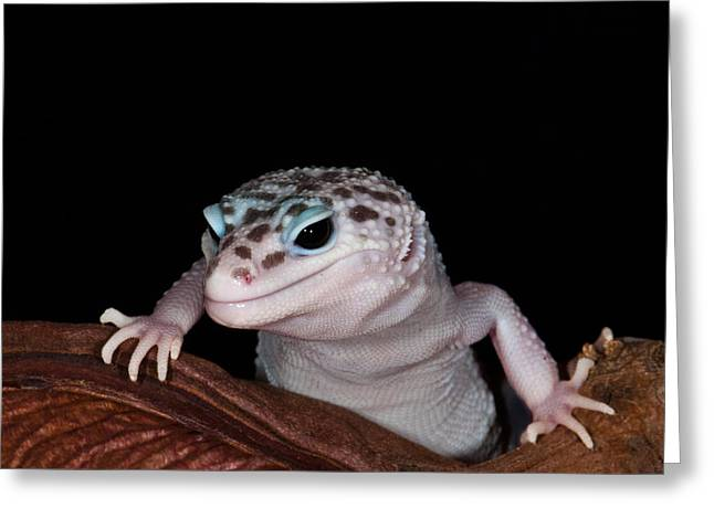 Geckos Greeting Cards - Im watching you Greeting Card by Melody Watson