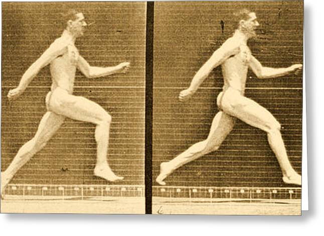 Image Sequence From Animal Locomotion Series Greeting Card by Eadweard Muybridge