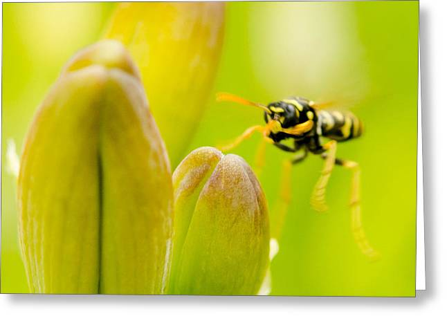 Day Lilly Greeting Cards - Imminent Landing Greeting Card by Kathy Paynter