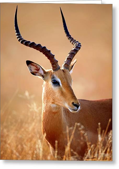 Impala Male Portrait Greeting Card by Johan Swanepoel
