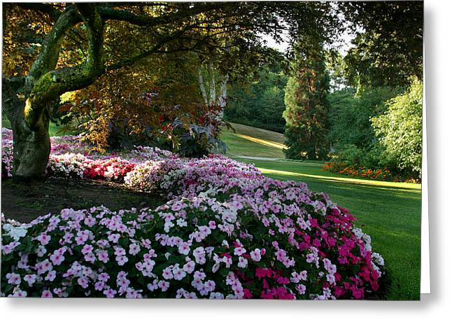 Impatiens Flowers Greeting Cards - Impatiens in Paradise Greeting Card by Joseph G Holland