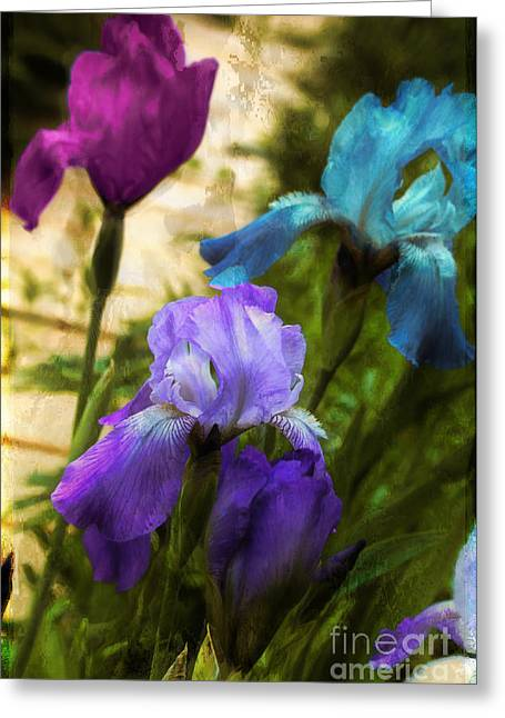Fuschia Greeting Cards - Impossible Irises Greeting Card by Mindy Sommers