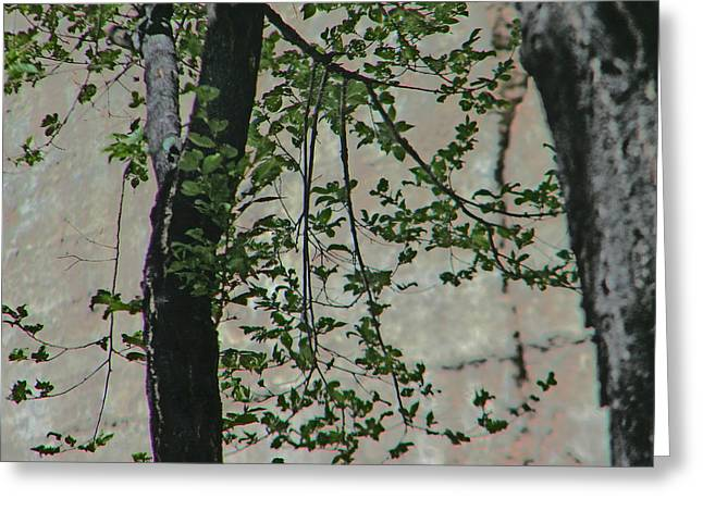 Subtle Colors Greeting Cards - Impression of Wall and Trees Greeting Card by Lenore Senior