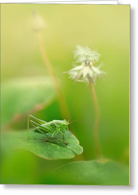 Katydid Greeting Cards - Impression with grasshopper Greeting Card by Jaroslaw Blaminsky