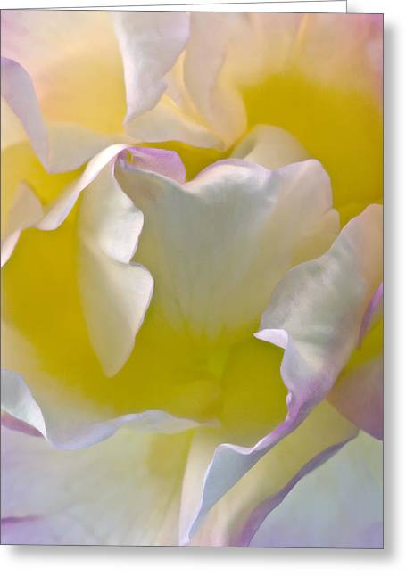 Floral Photographs Digital Greeting Cards - Impressions From Heaven I Greeting Card by Artecco Fine Art Photography