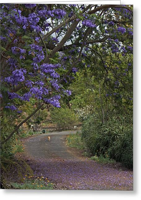 Paradise Road Greeting Cards - In a Moment Greeting Card by Allen Lefever