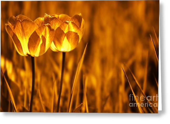 Duo Greeting Cards - In a Perfect World Greeting Card by Photodream Art