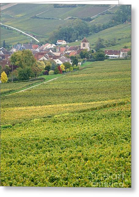 In Champagne Greeting Card by Olivier Le Queinec
