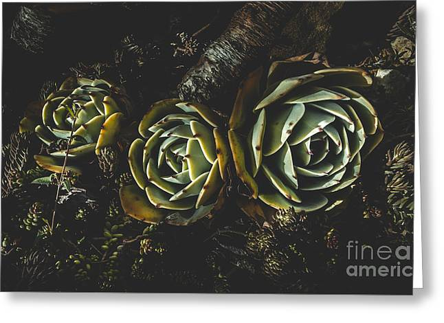 In Dark Bloom Greeting Card by Jorgo Photography - Wall Art Gallery