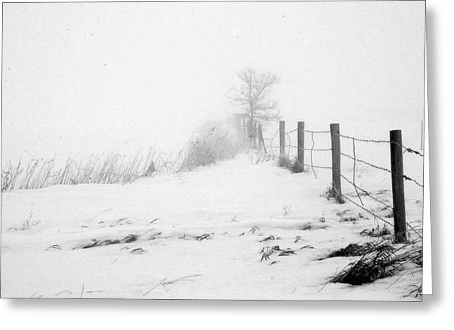 In Defense of Snow Greeting Card by Julie Lueders