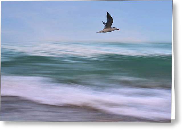 In Flight Greeting Card by Laura Fasulo
