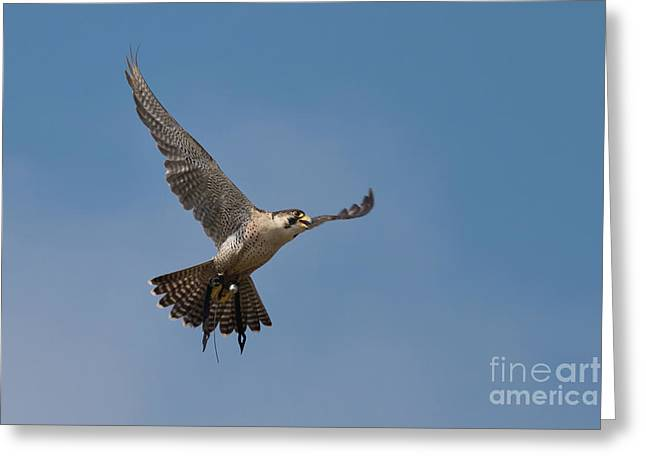 In Flight Greeting Card by Terri Waters