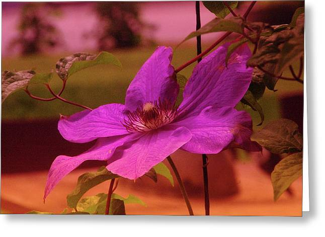 In Full Bloom Greeting Cards - In Full Blue Blossom  Greeting Card by Jeff  Swan