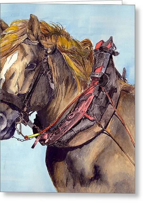 Horse And Cart Greeting Cards - In Harness Greeting Card by Kate Murray