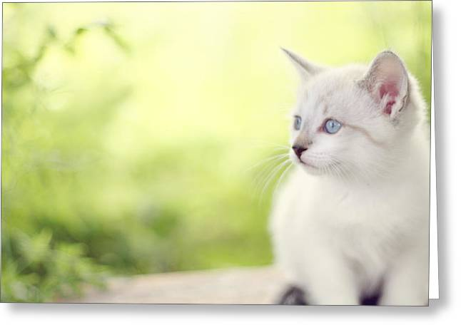 Kitten Prints Greeting Cards - In Her Eyes Greeting Card by Amy Tyler