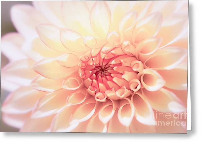 Pink Flower Greeting Cards - In Love with Dahlia Greeting Card by Ana V  Ramirez