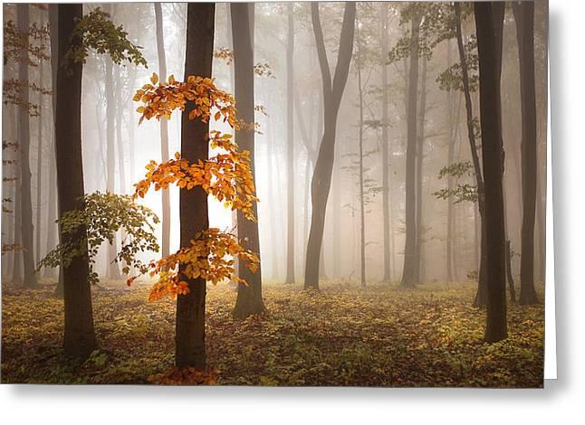 In November Light Greeting Card by Franz Schumacher