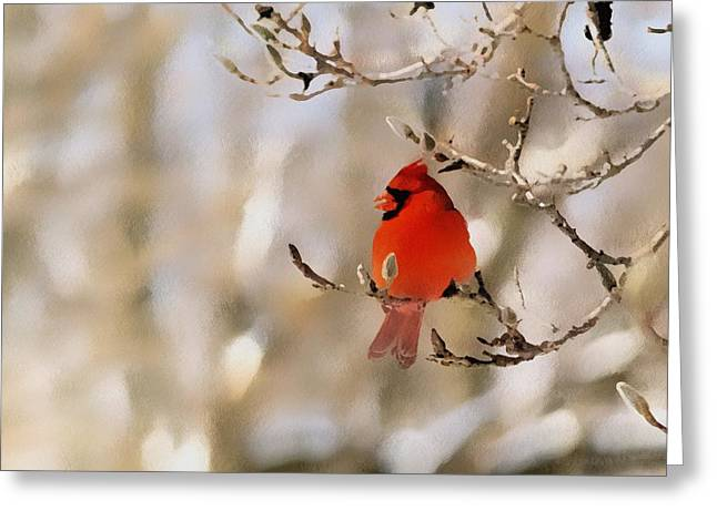Cardinals. Wildlife. Nature. Photography Greeting Cards - In Red Greeting Card by Gabriele Swanson