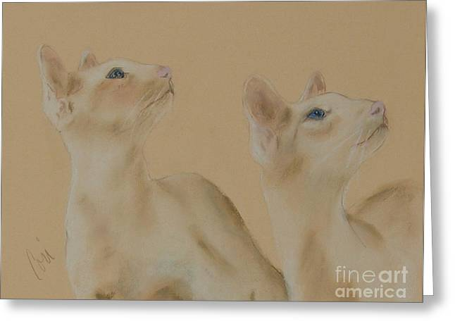Red Point Siamese Greeting Cards - In Sync Greeting Card by Cori Solomon