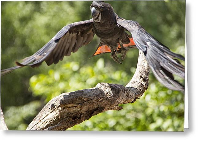 Black Top Greeting Cards - In the Air Greeting Card by Douglas Barnard