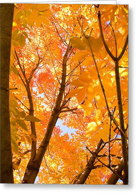 In The Autumn Mood  Greeting Card by James BO  Insogna