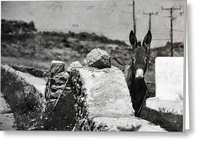In The Countryside Of Mykonos Greeting Card by Laura Melis