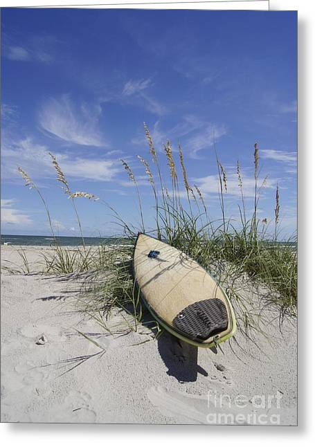 Salt Life Greeting Cards - In the Dunes Greeting Card by Benanne Stiens