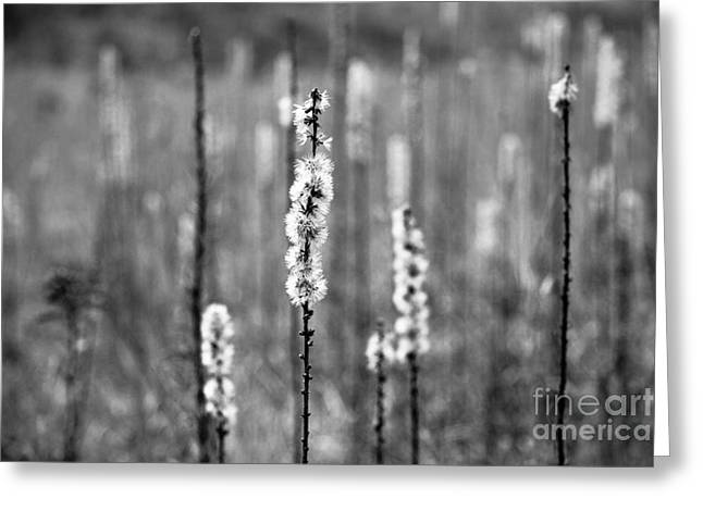 Wild Grass Greeting Cards - In The Field Greeting Card by Ana V  Ramirez