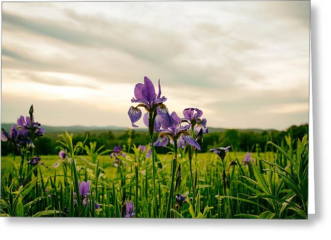Tv Set Greeting Cards - In the Field of Flowers Greeting Card by Nathan Larson
