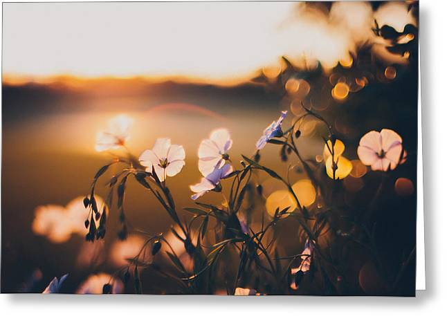 Garden Flowers Photographs Greeting Cards - In the Garden Greeting Card by Tracy  Jade