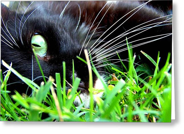 In The Grass Greeting Card by Jai Johnson