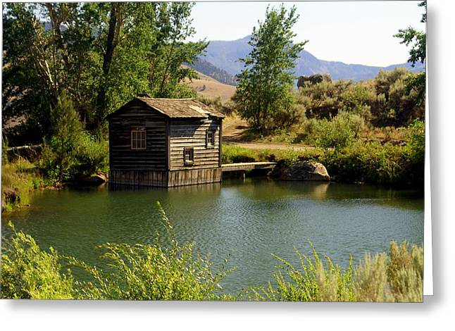 Marty Koch Greeting Cards - In The High Country Greeting Card by Marty Koch