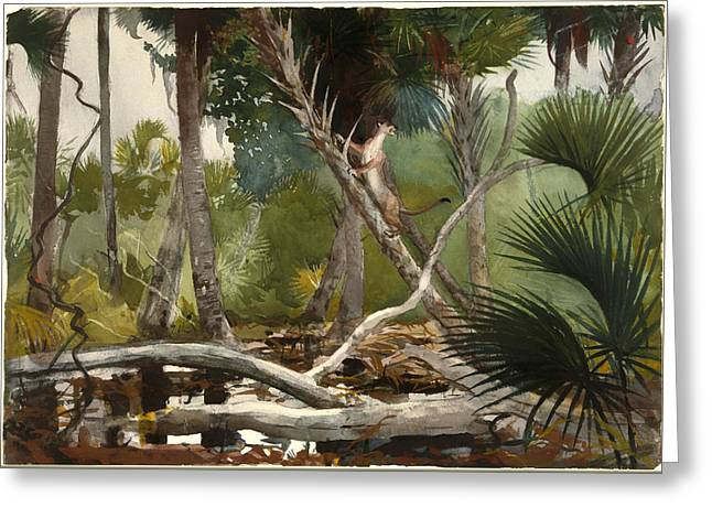 Wildcats Paintings Greeting Cards - In The Jungle - Florida Greeting Card by Winslow Homer