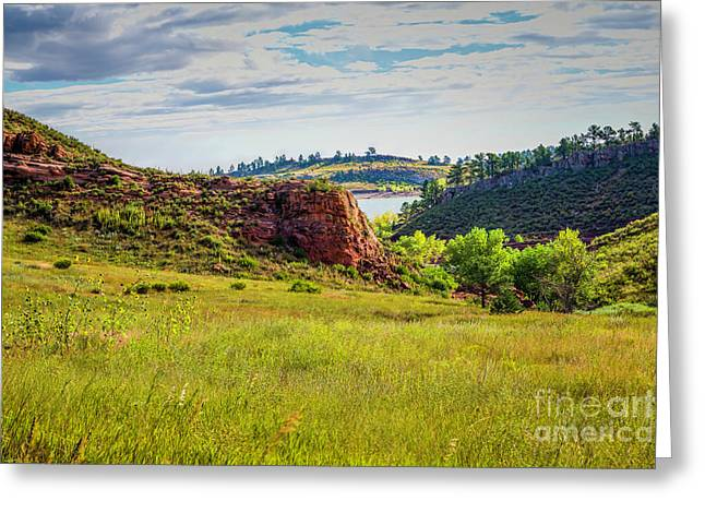 In The Meadow Greeting Card by Jon Burch Photography