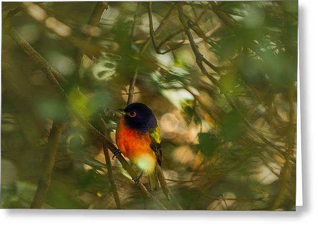 Wildlife Refuge. Greeting Cards - In the Midst Greeting Card by Christopher Parker