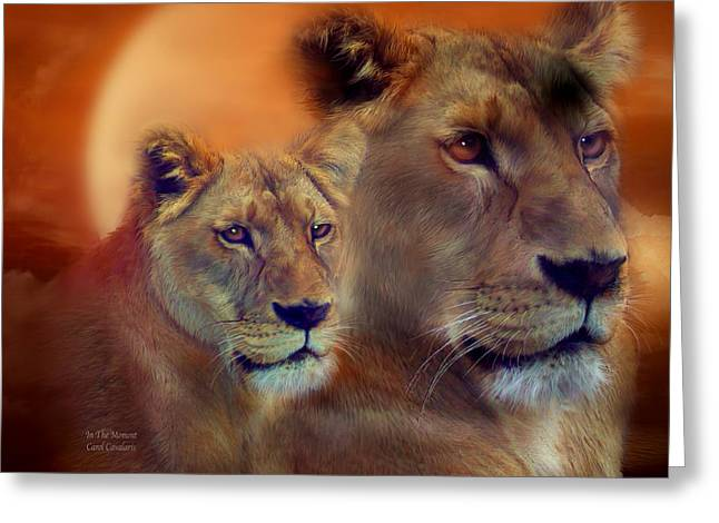 Lioness Greeting Cards - In The Moment Greeting Card by Carol Cavalaris