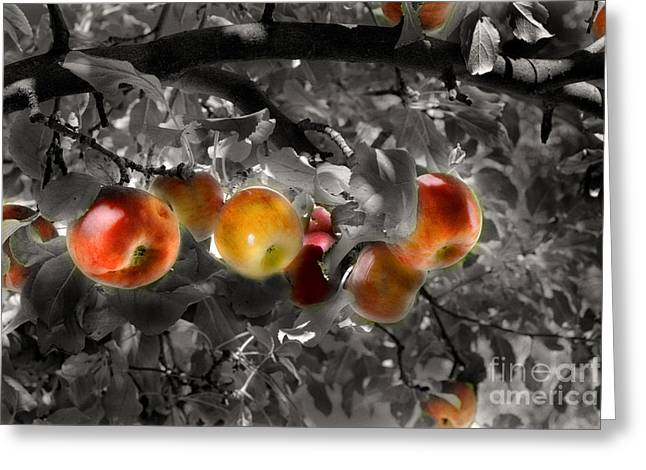 In The Orchard Of The Artists Greeting Card by William Fields