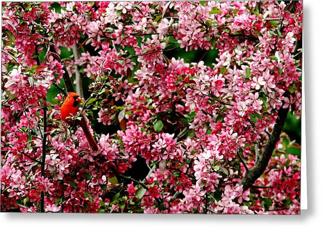 The Trees Greeting Cards - In The Pink Greeting Card by Debbie Oppermann