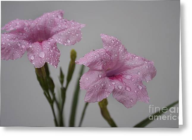 Rose Petals Greeting Cards - In The Pink Greeting Card by Skip Willits