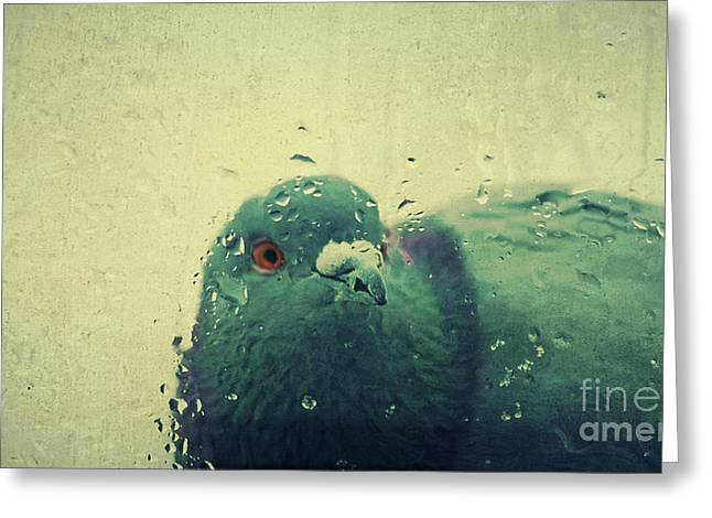 Rain Drop Mixed Media Greeting Cards - In the rain... Greeting Card by Angela Doelling AD DESIGN Photo and PhotoArt