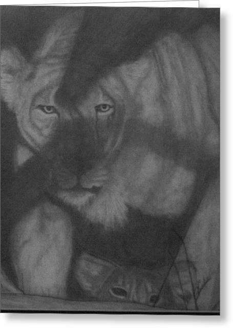 Lioness Drawings Greeting Cards - In the Shadows Greeting Card by Jose Cabral