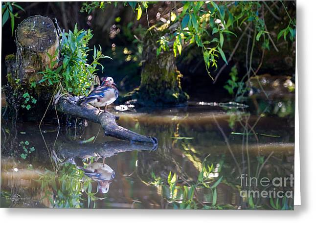 Reflection In Water Greeting Cards - In the Shadows Greeting Card by Torbjorn Swenelius