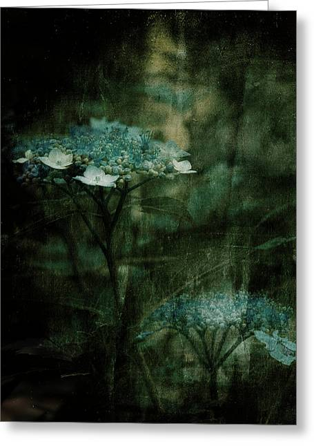 Flower Photos Mixed Media Greeting Cards - In the Still of the Night Greeting Card by Bonnie Bruno