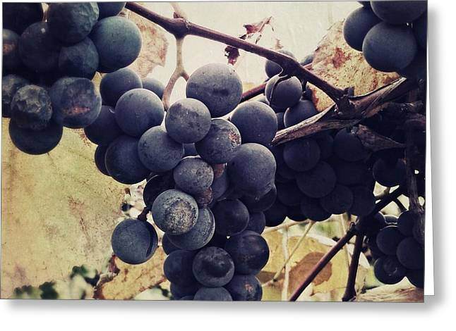 Concord Grapes Digital Greeting Cards - In the vineyard Greeting Card by Mahalograph                                        Photography