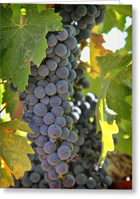 Cambria Greeting Cards - In the Vineyard Greeting Card by Nancy Ingersoll