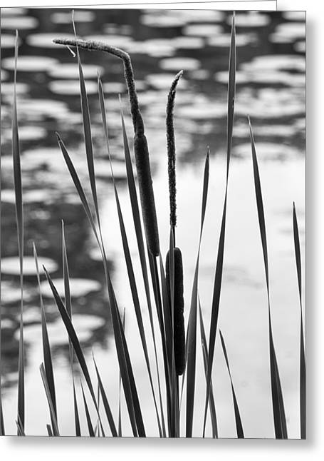 Bulrushes Greeting Cards - In the Weeds Greeting Card by Christi Kraft
