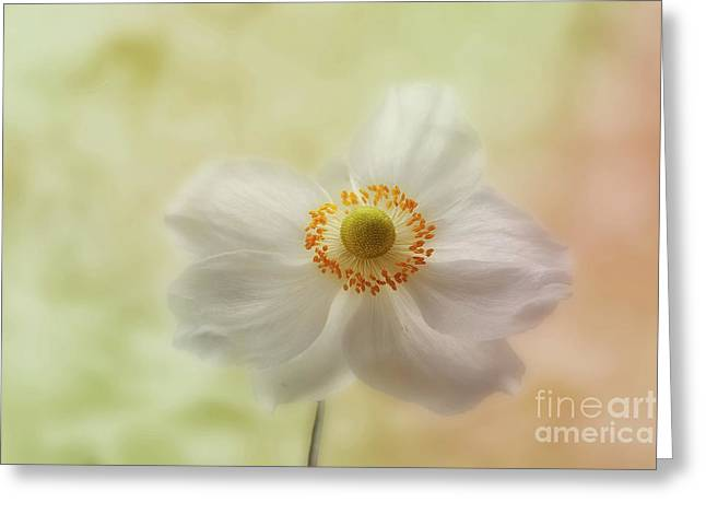 Anemone Greeting Cards - In the whisper of a gentle breeze  Greeting Card by John Edwards