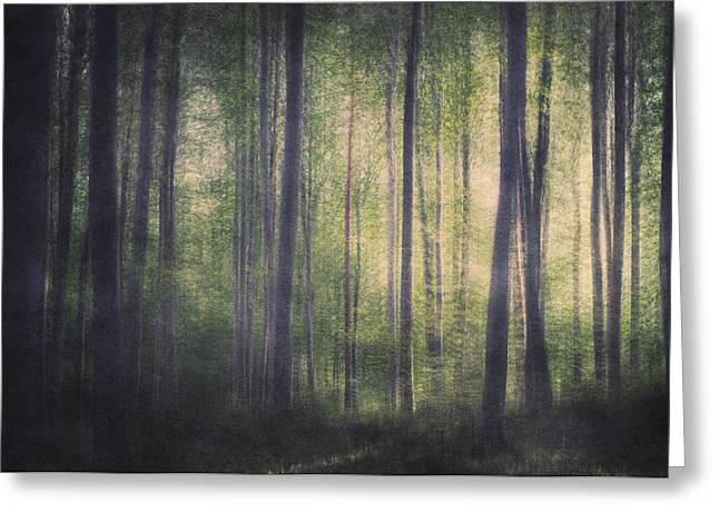 In The Woods Of Mournton Combs Greeting Card by Violet Gray