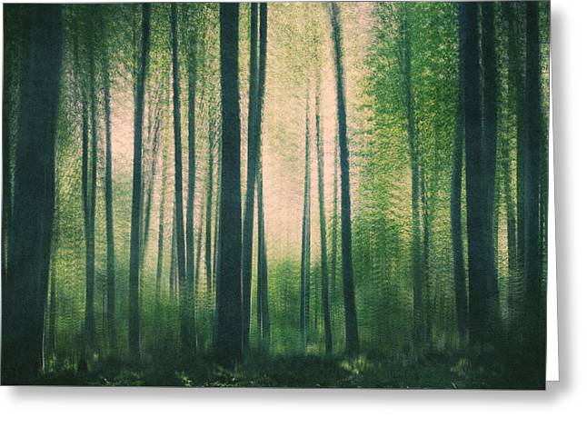 In The Woods Greeting Card by Violet Gray