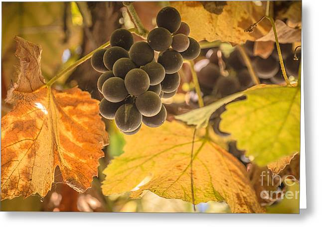 Blue Grapes Greeting Cards - In the yellow shade Greeting Card by Lyudmila Prokopenko